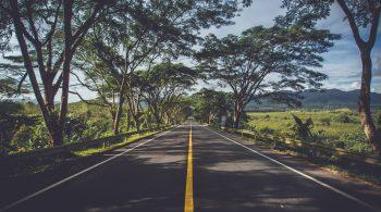 asphalt-environment-grass-239520